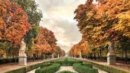 El otoño mas bello - Catálogo de obras de Antonello Dellanotte | RegalaMadrid