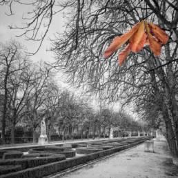 La última nota del otoño. Antonello Dellanotte