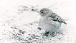 La portada de la semana. Baby Sparrow