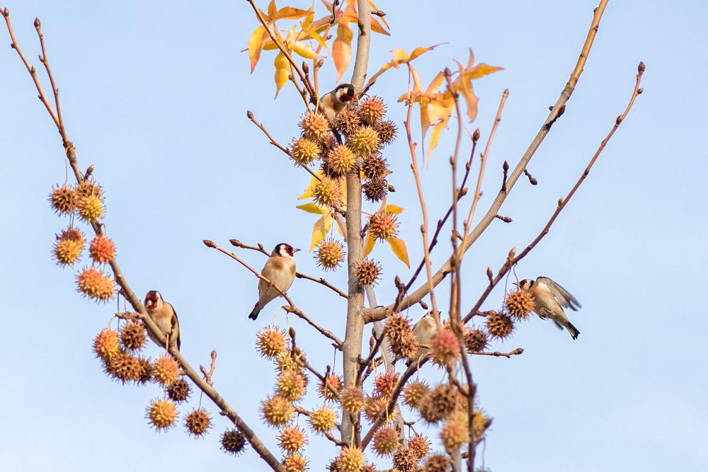 Aves del Retiro